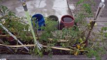 There are also rainwater barrels collecting water as the summers are dry & the plants & veggies need watering